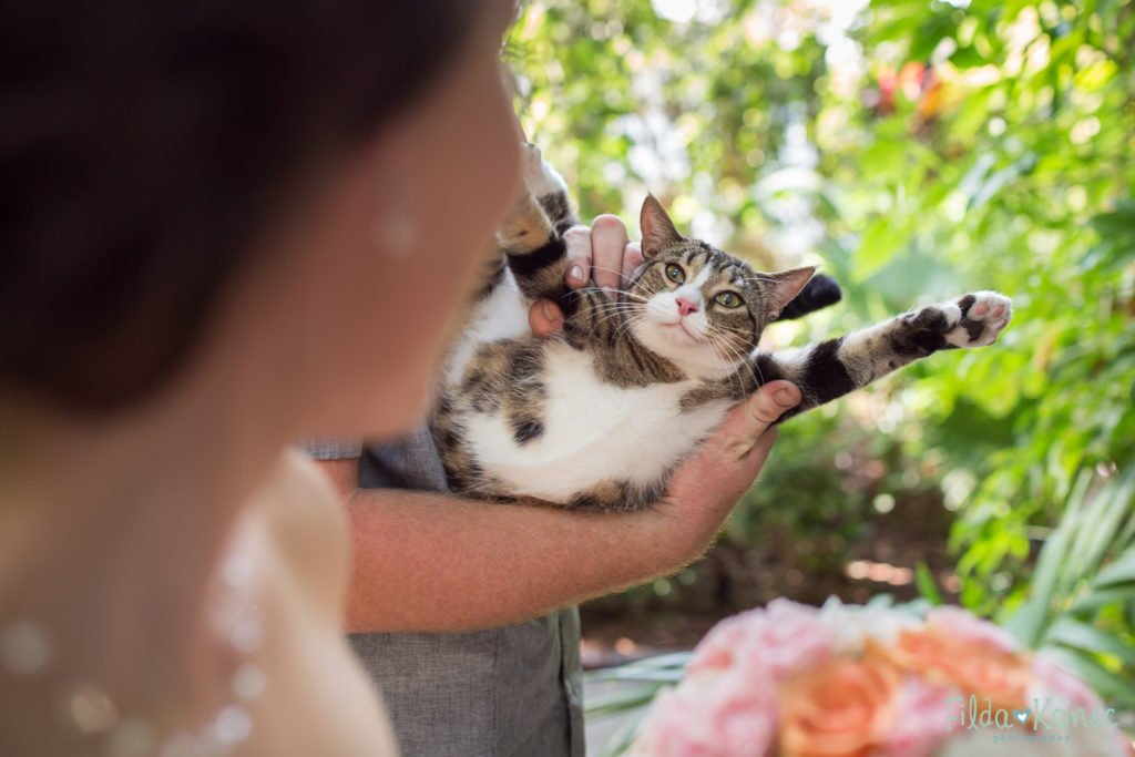 bride with one of the hemingway home cats