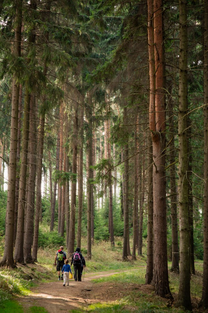 photo of family on forest hike
