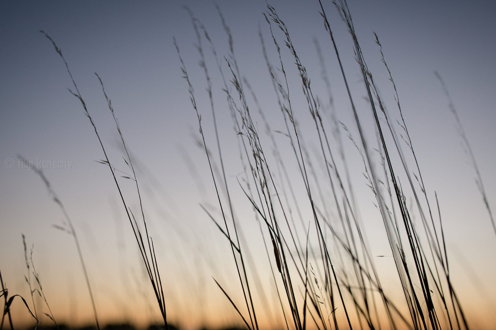 photo of grass against the sunset