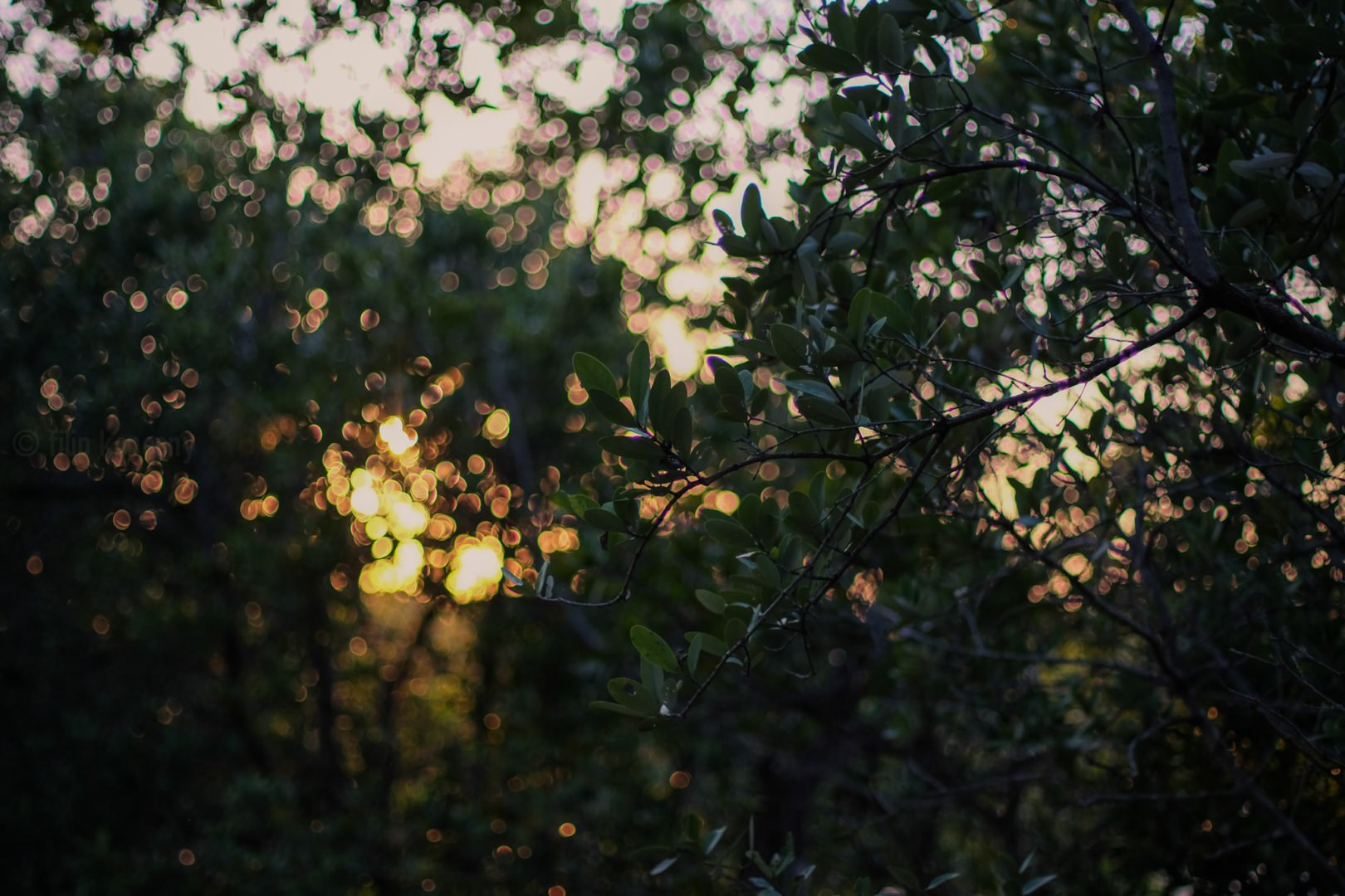 green leafy plant against the sunset