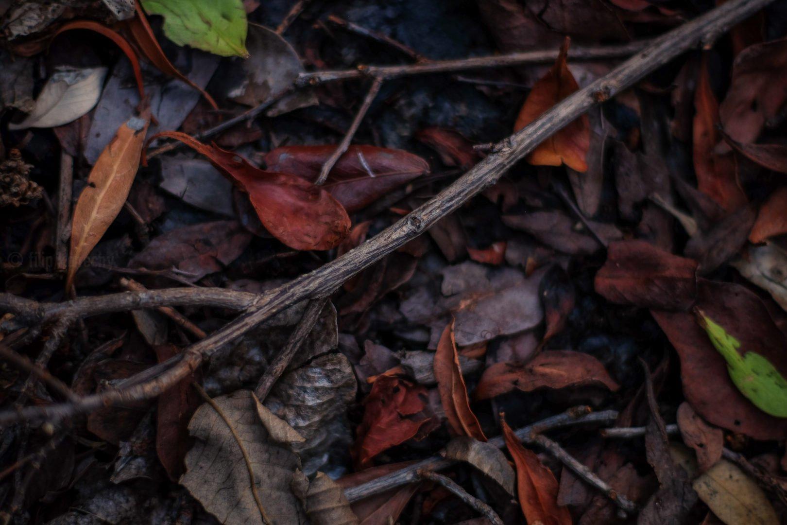 florida wetland ground cover