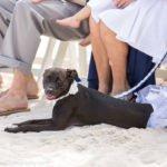 cute black dog on the beach