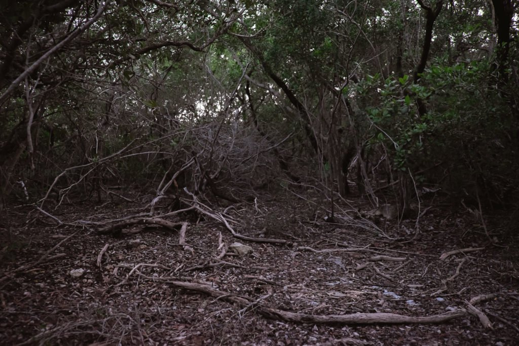 old fallen branches in florida keys woods