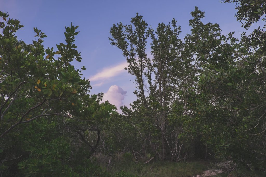 beautiful landscape with trees near key west, florida
