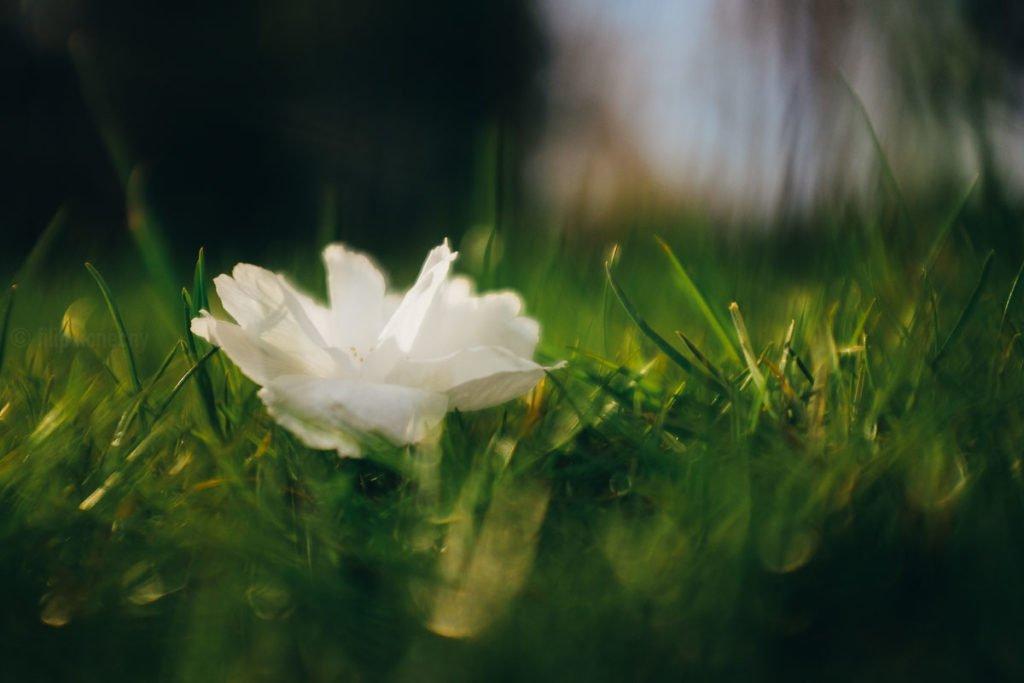 tree petal