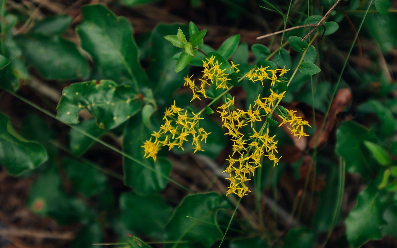 beautiful central florida nature