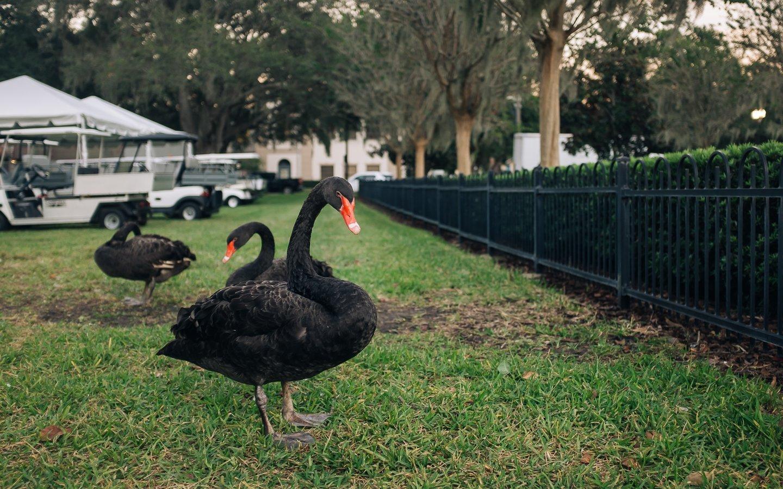 black swan downtown orlando